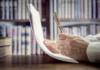 «Compromis de vente : trois points de vigilance», Anne-Claude Poncet Expert immobilier BusinessFil