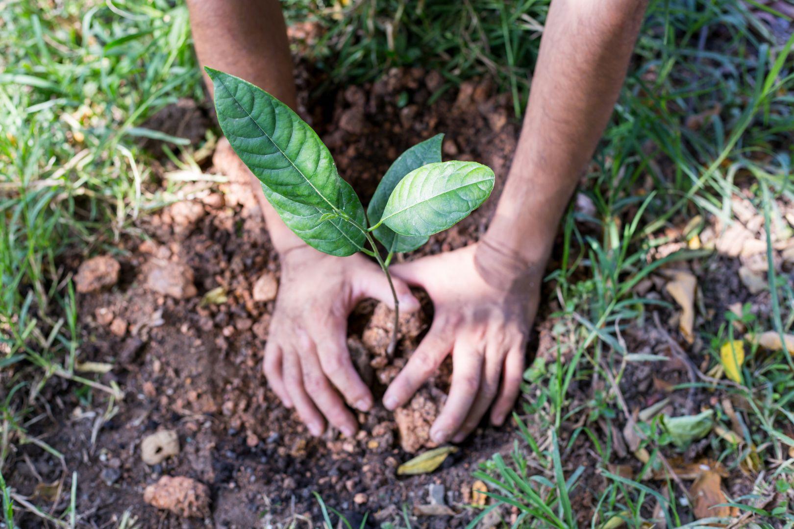 La Boite Immo adopte une attitude eco-responsable