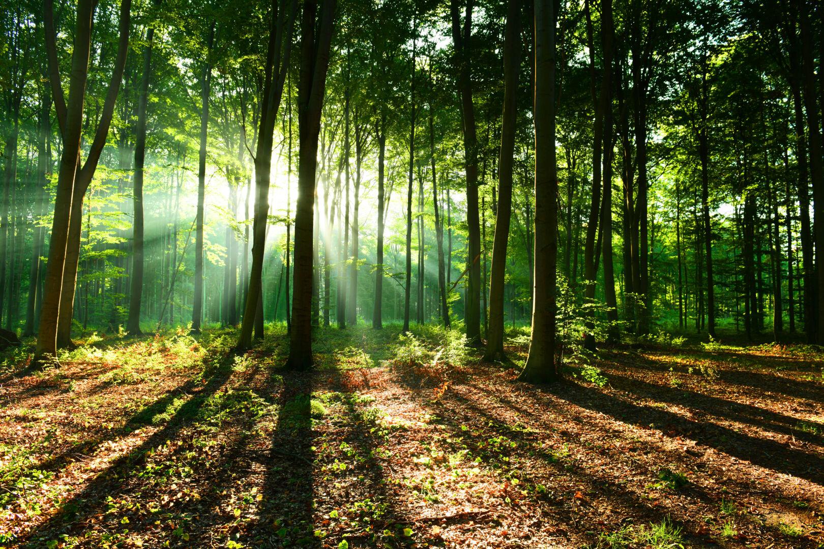 Avec son opération « Plantons avec Laforêt », Laforêt continue de contribuer activement à la reforestation en France !