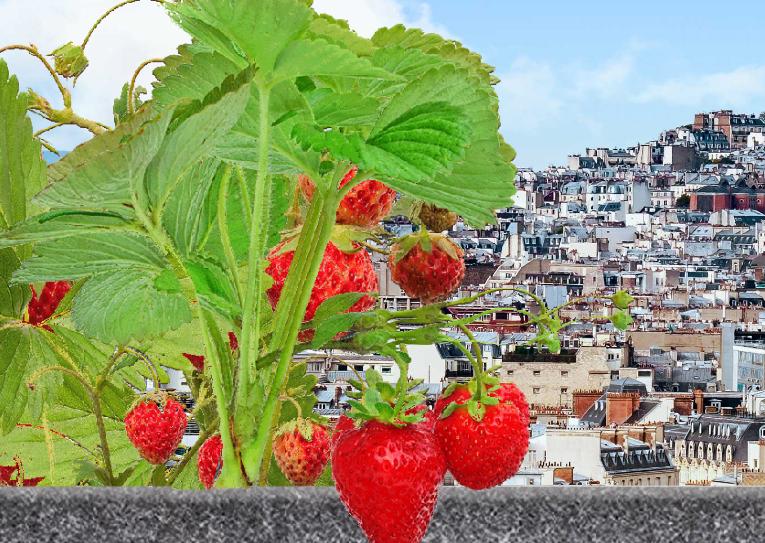 Happy Jardinet, des carrés potagers pour cultiver du vert et de la convivialité dans les bâtiments en collectivité